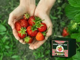 Home Berry Box - hausgemachte Erdbeeren - in apotheke - kaufen - forum