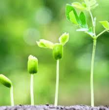 Agromax – den Körper reinigen - inhaltsstoffe – comments – kaufen